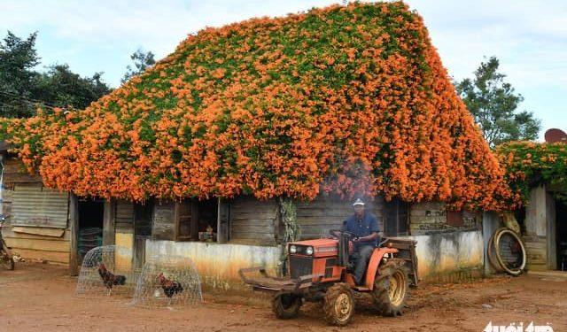 Mái nhà hoa ớt của K'Típ 11