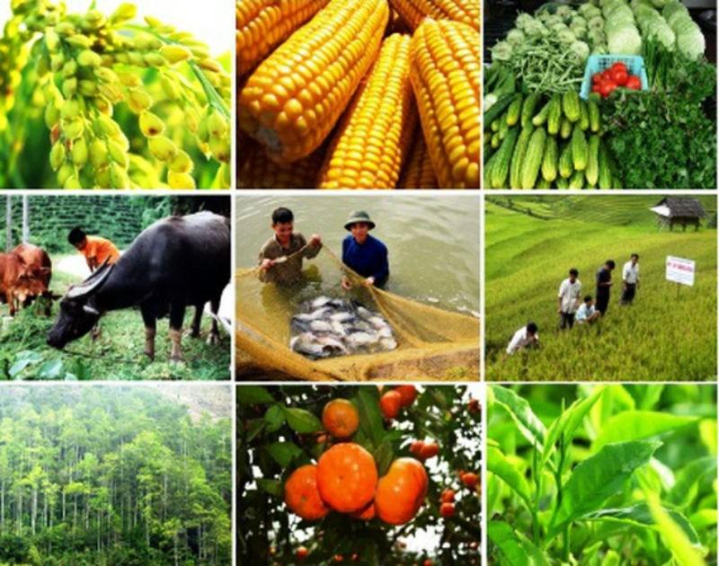 Điểm sáng nào cho nông nghiệp Việt Nam giữa cơn đại dịch? 3