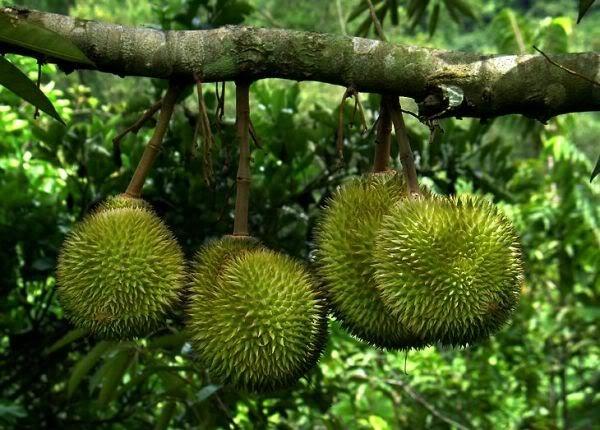 """""""Ăn trái cây như ở miền Tây"""" ngay tại Quảng Nam 3"""