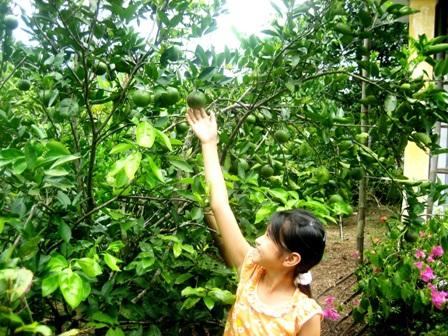 """""""Ăn trái cây như ở miền Tây"""" ngay tại Quảng Nam 8"""