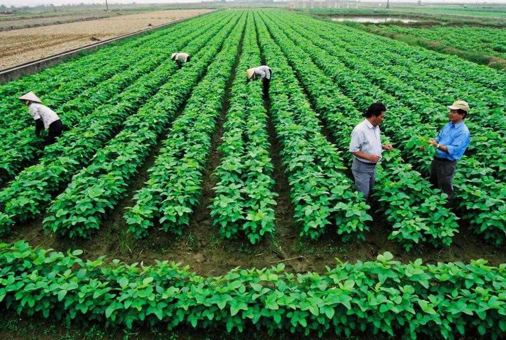 Miễn thuế đất nông nghiệp - nên miễn cho ai? 1