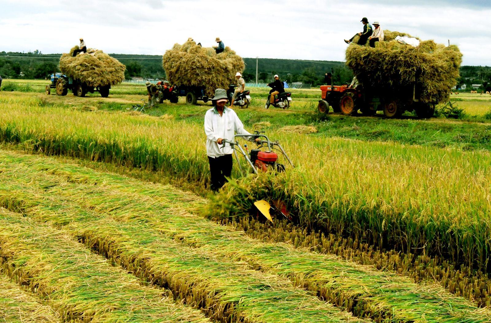 Việc miễn thuế đất nông nghiệp với từng hộ nông dân có ý nghĩa động viên và khuyến khích họ đẩy mạnh, phát triển sản xuất trong giai đoạn kinh tế gặp nhiều khó khăn bởi đại dịch Covid-19. Nguồn ảnh: Tạp chí Thời Đại