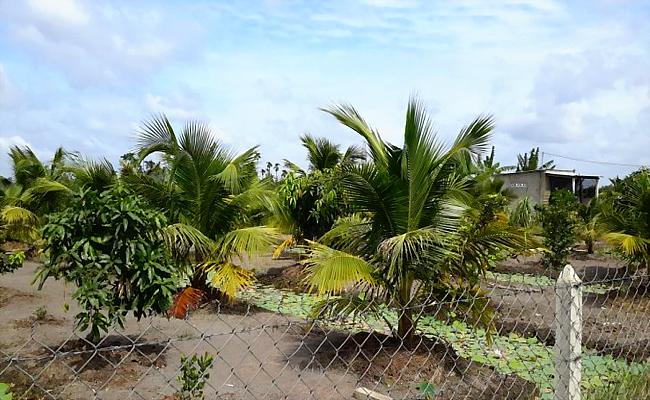 Săn đất làm nhà vườn, nhanh thèm mau chán? 4