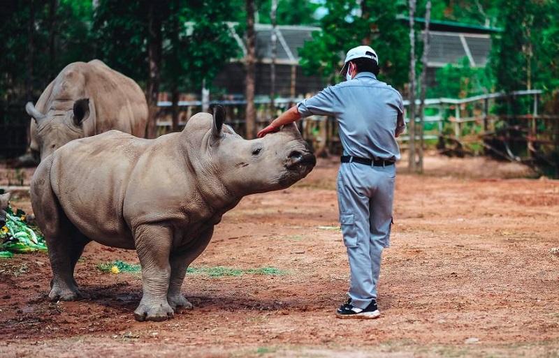 Kỷ lục 4 tê giác con chào đời trong vòng 16 tháng tại Vinpearl Safari 6