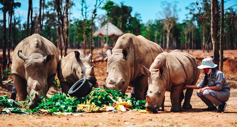 """Gặp gỡ những tê giác con """"quốc tịch Việt"""" ở Vinpearl Safari 1"""