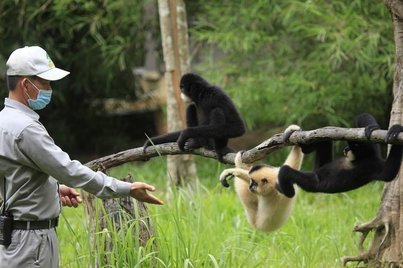 Vinpearl Safari hồi sinh thần kỳ cho gấu ngựa 6
