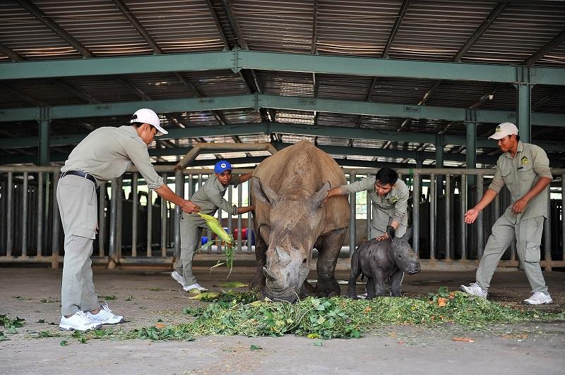 """Gặp gỡ những tê giác con """"quốc tịch Việt"""" ở Vinpearl Safari 6"""