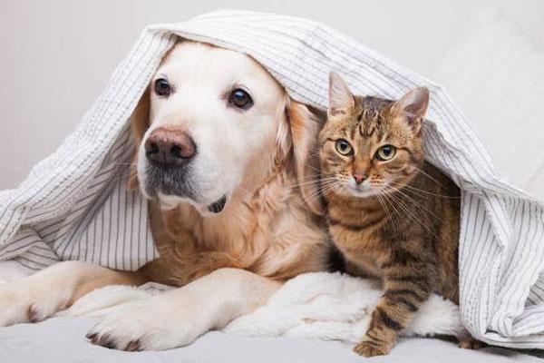 Nuôi Chó, Mèo ở chung cư: Xin hãy văn minh để đừng ảnh hưởng đến người khác 2