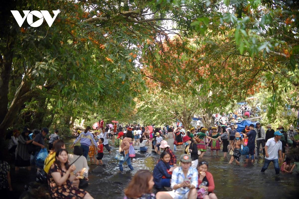 Bình Định: Hoa trang rừng nở rực rỡ hút khách tham quan 6