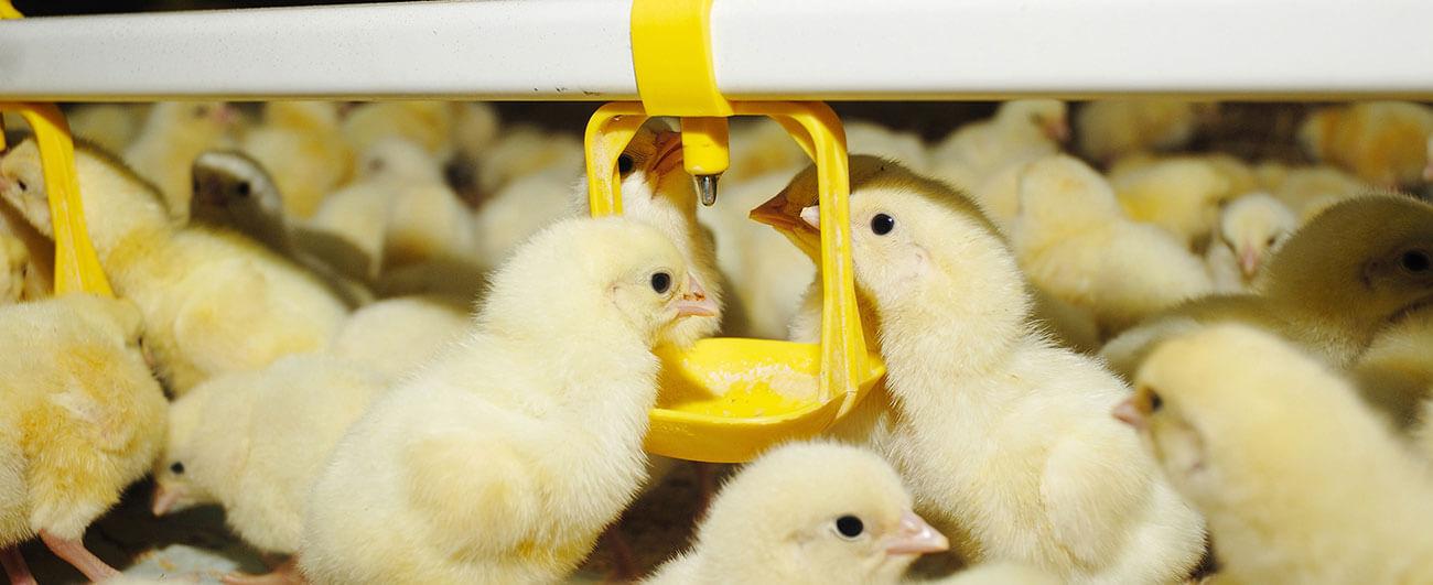 Nhà máy ấp trứng có giá trị 200 tỉ đồng vừa ra đời, mở hướng đi mới cho phát triển nông nghiệp bền vững 8