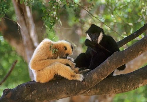 Vườn Quốc gia Bến En: Điểm du lịch khám phá đầy hấp dẫn 7