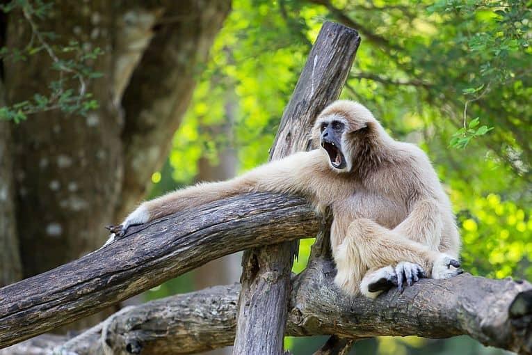 Vườn Quốc gia Bến En: Điểm du lịch khám phá đầy hấp dẫn 8