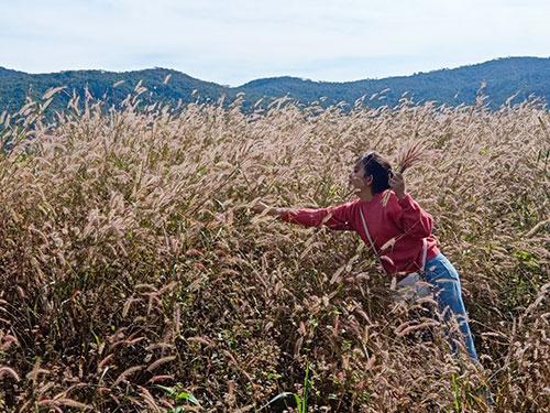 Cánh đồng cỏ lau làm say lòng khách đến Bình Thuận 3
