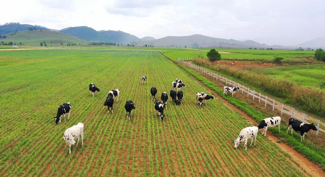 """Siêu dự án trang trại của Vinamilk tại Lào sẽ """"cho sữa"""" vào đầu năm 2022 7"""