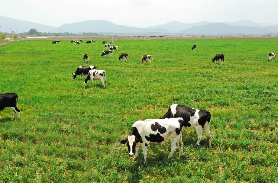 """Siêu dự án trang trại của Vinamilk tại Lào sẽ """"cho sữa"""" vào đầu năm 2022 8"""